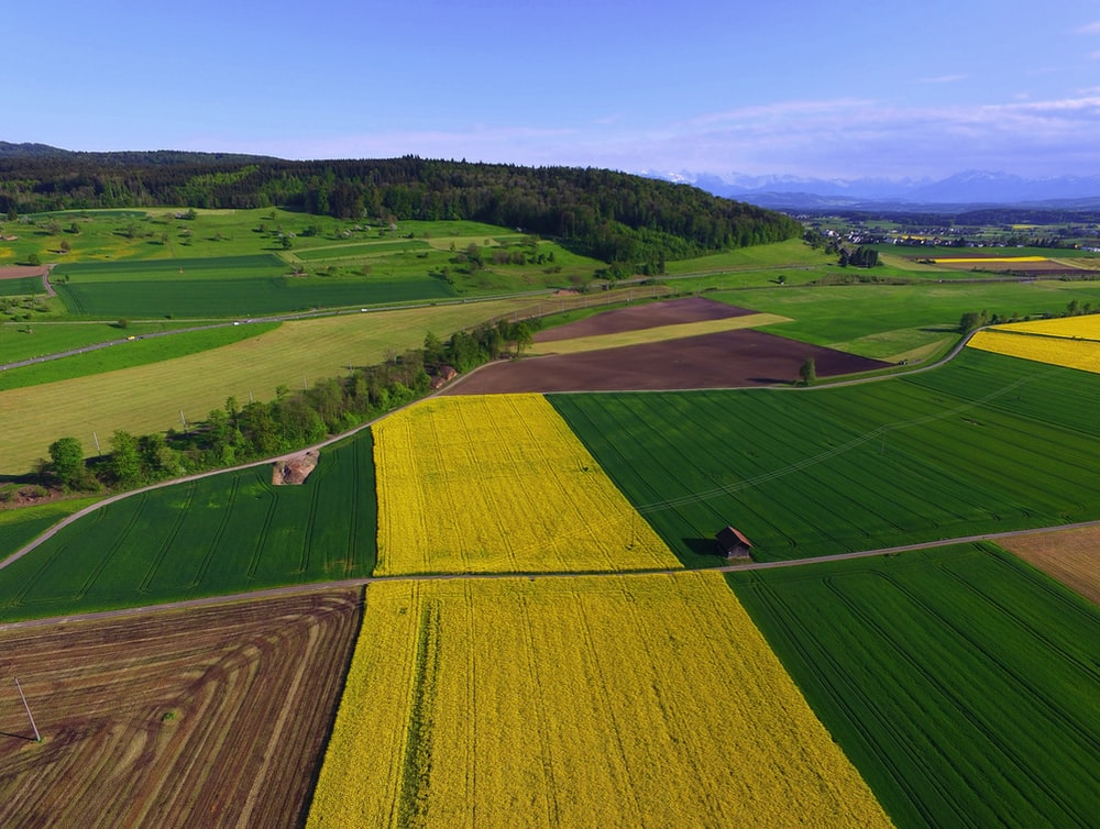 green and yellow field during daytime
