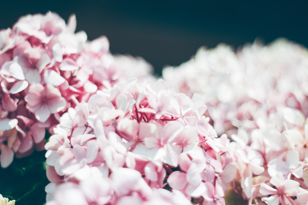 selective focus photography of pink cluster flower