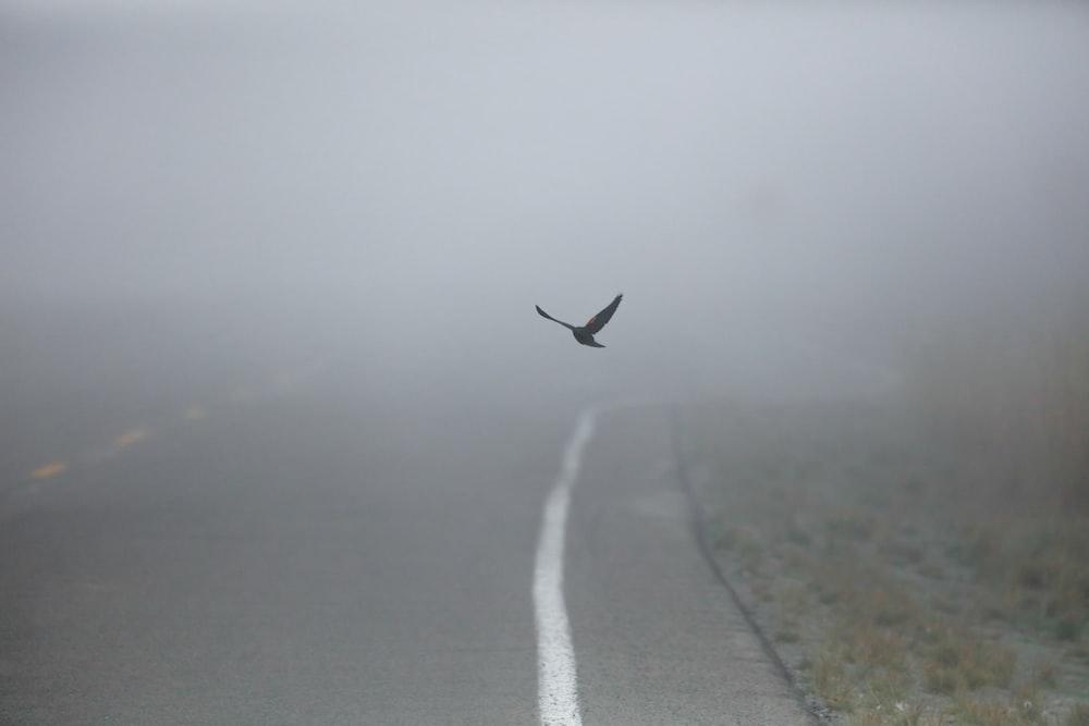 black bird in flight