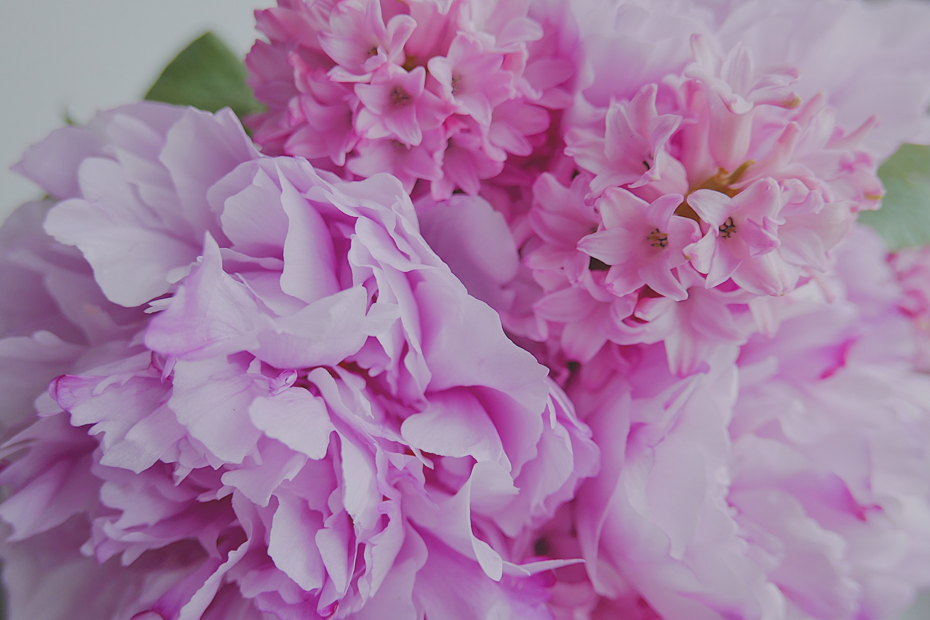 Macro of pink hydrangea and hyacinth bouquet arrangement in Spring