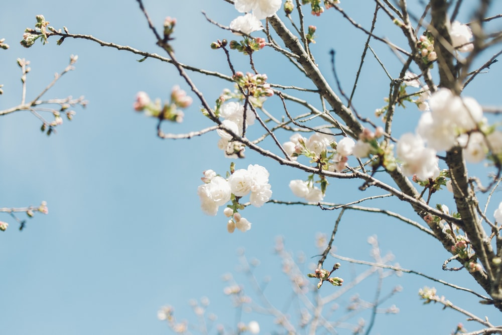 white flowers in tree branch during daytime