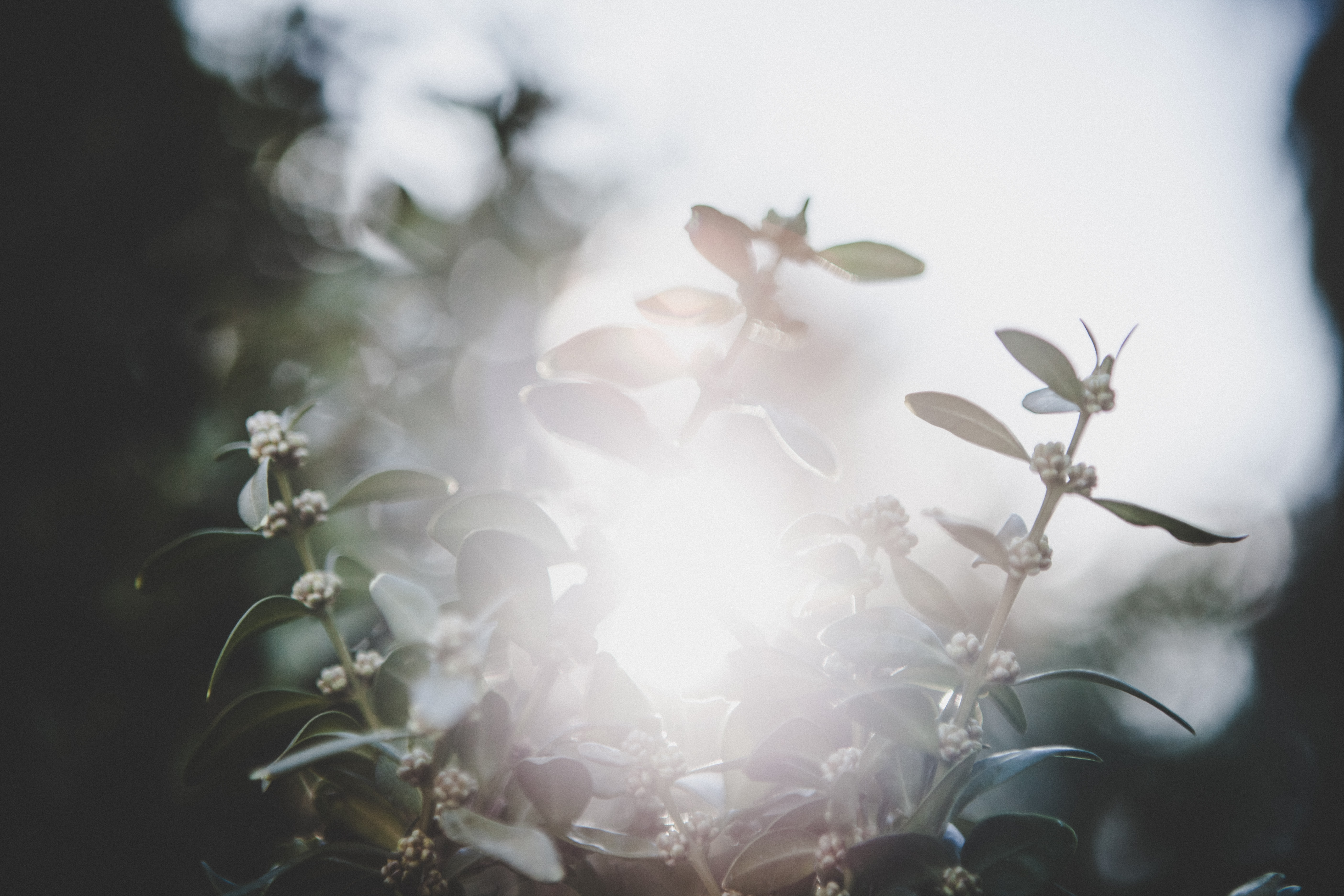 white petaled flowers shined by sunlight