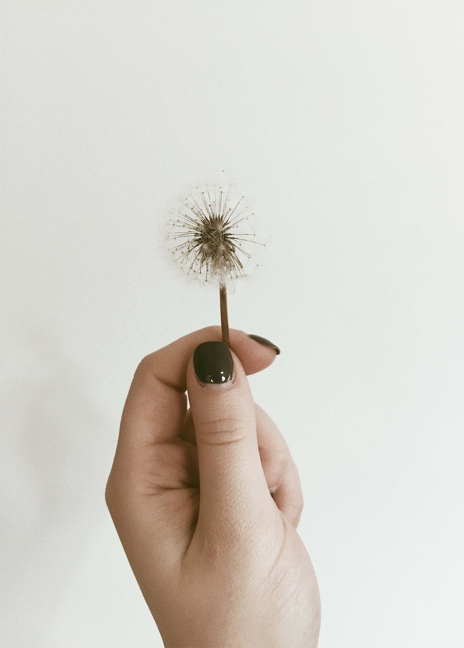 A woman's hand holding a dandelion