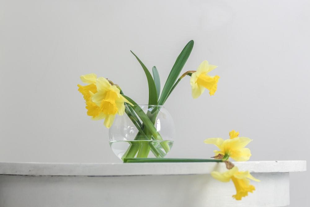 yellow flower inside vase beside wall