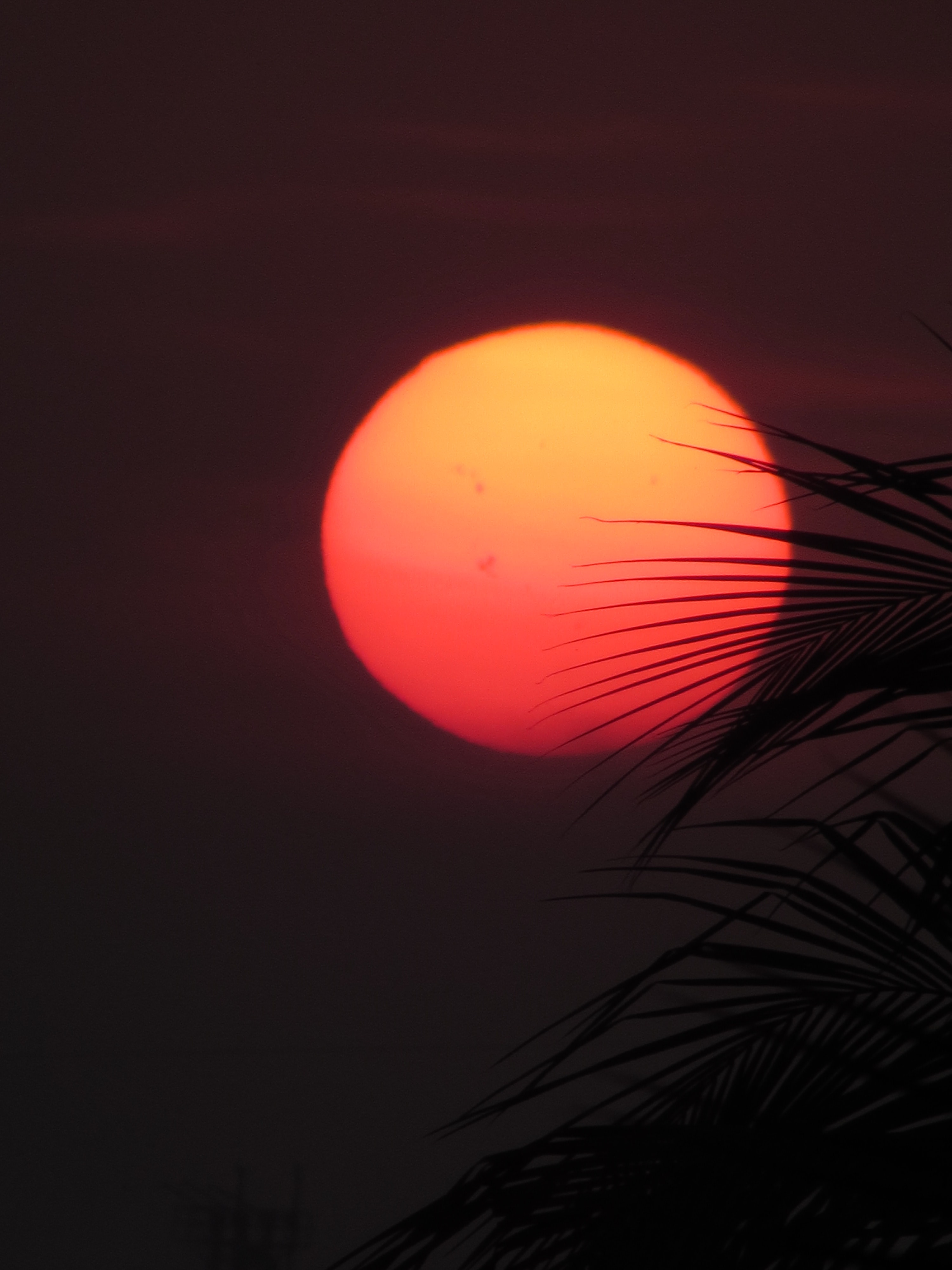 The red and orange sun as seen through silhouetted leafy branches during sunset.