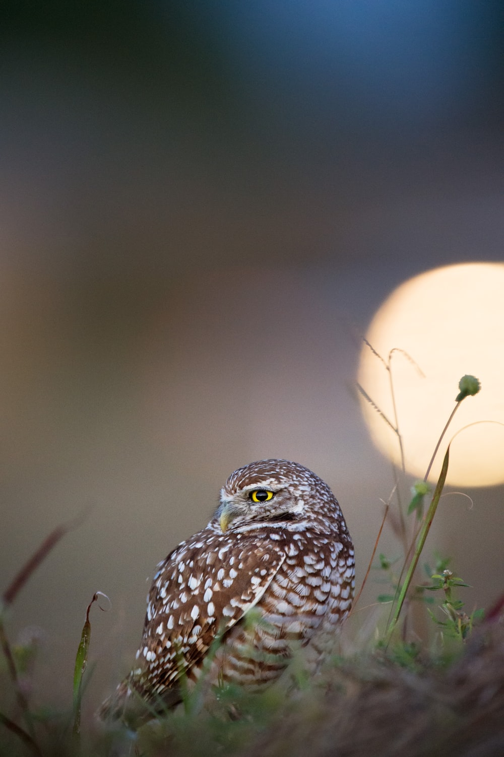 brown and white owl close-up photography