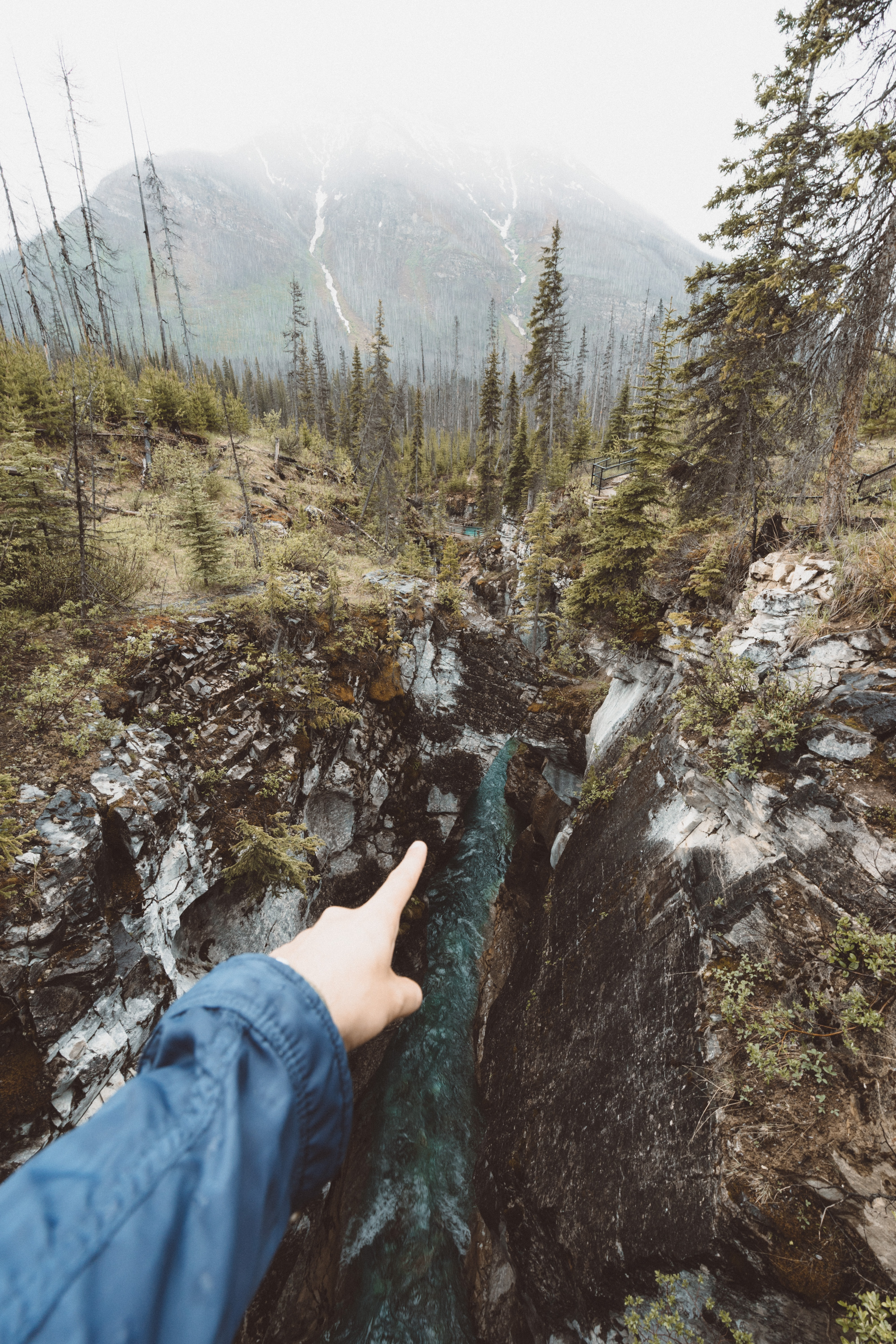 person pointing river surrounded by pine trees