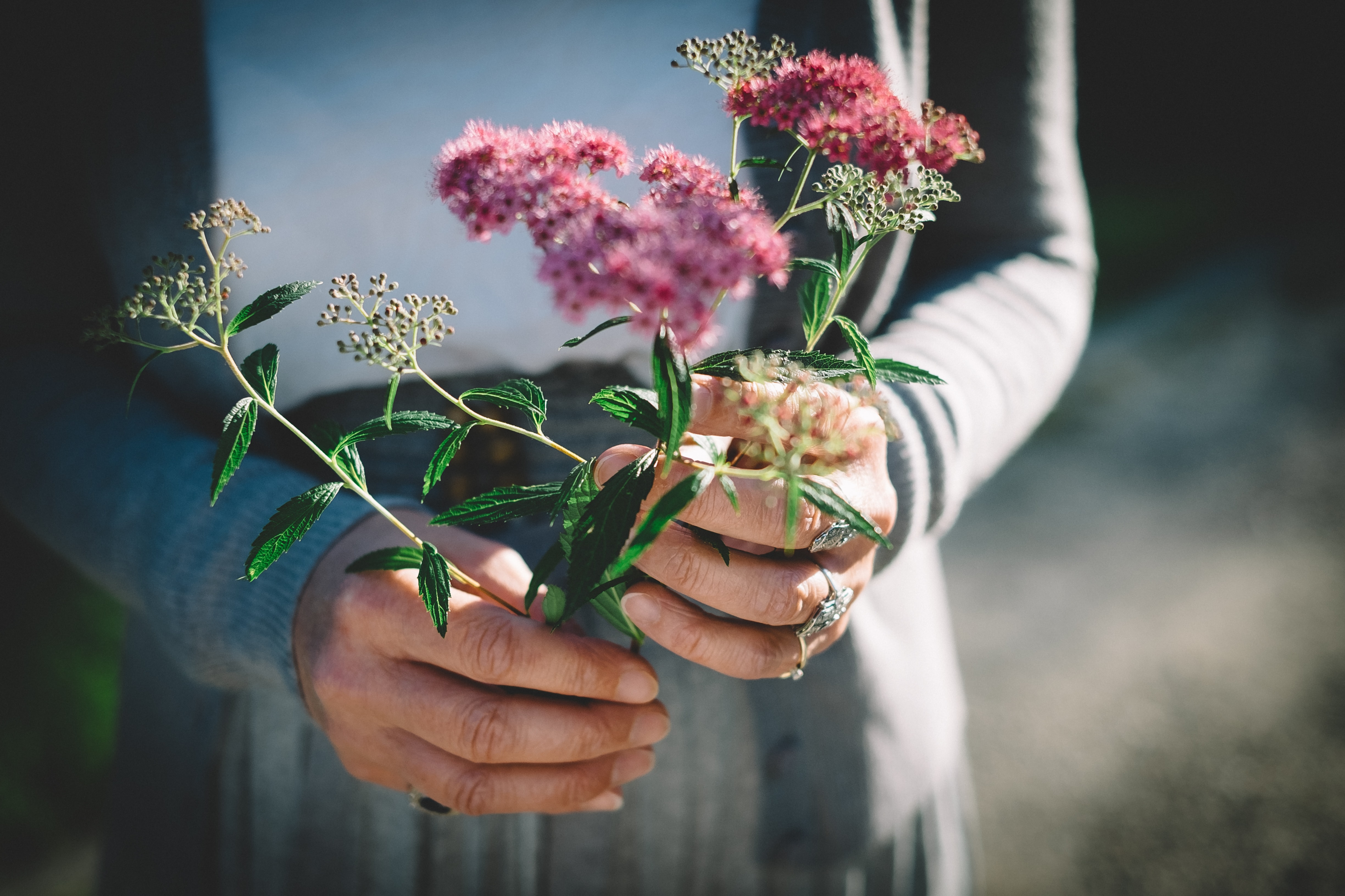 person holding flowers in macro photography
