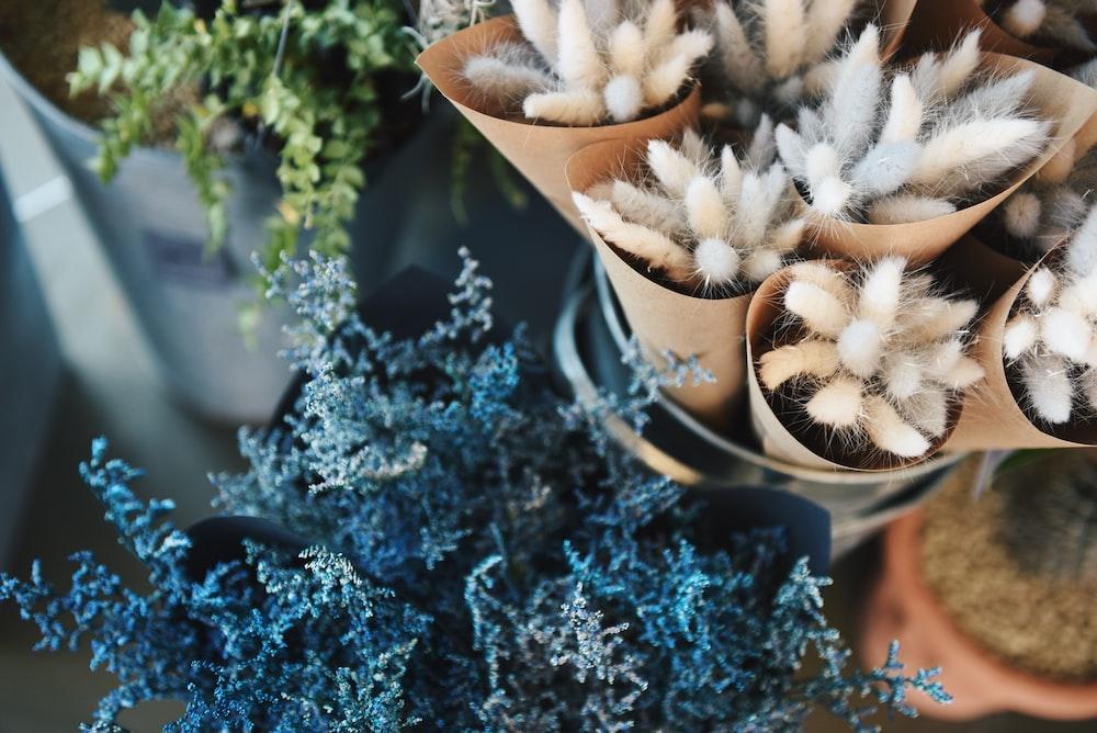 closeup photo of variety plants