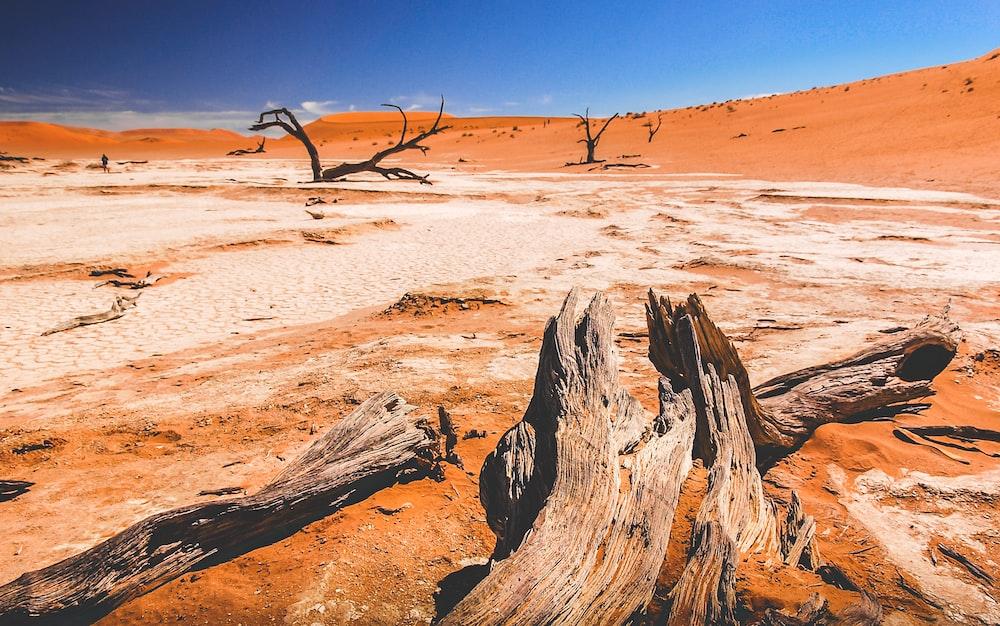 drift wood on desert place at daytime
