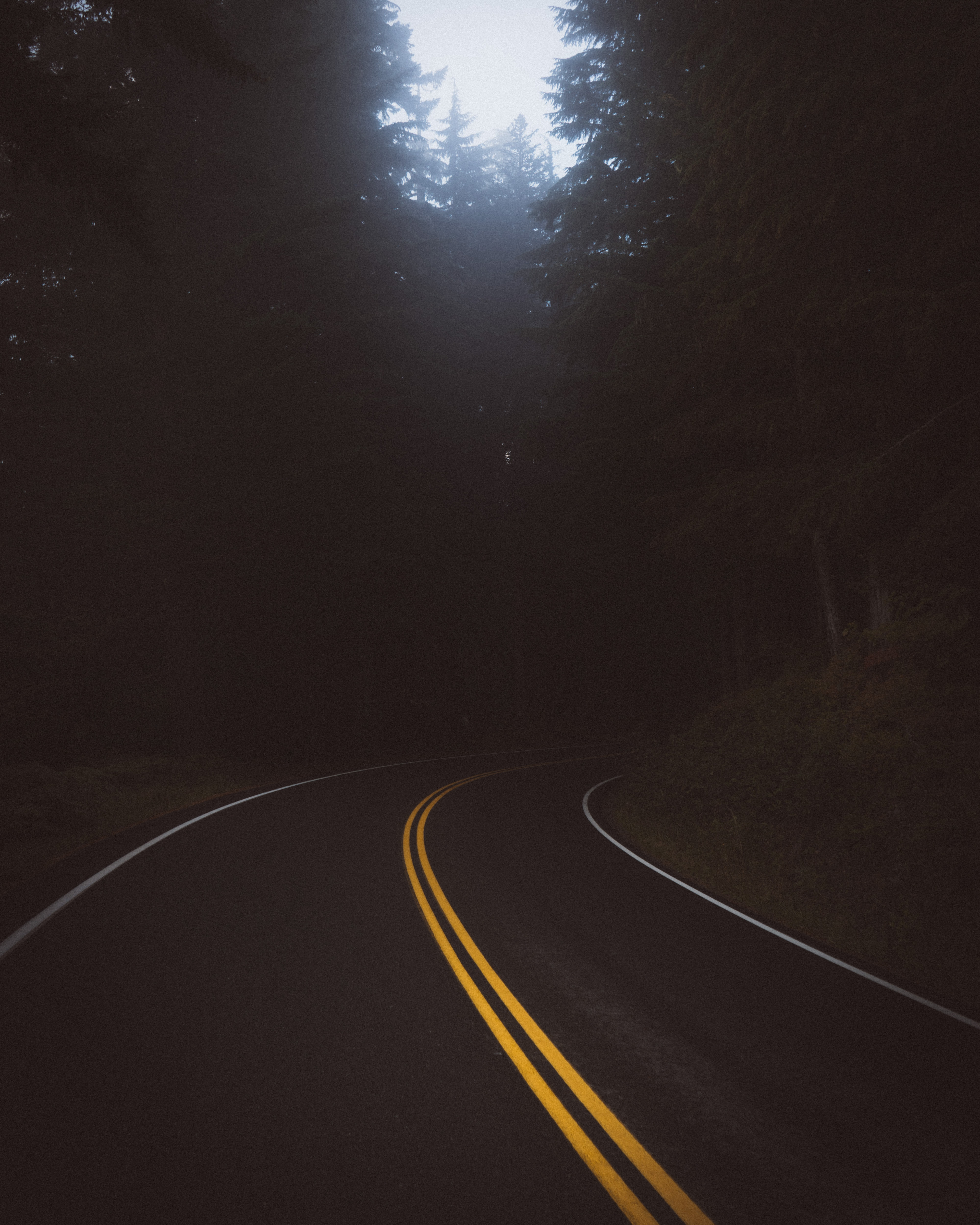empty road curvature surrounded by trees