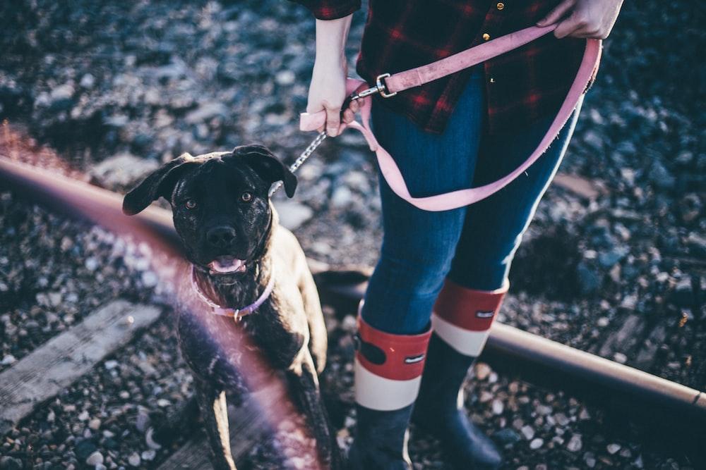 person holding short-coat black dog