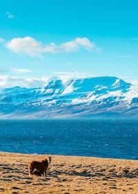 brown horse standing near beach during daytime