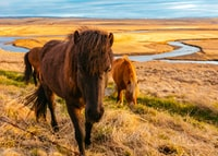 brown horses standing on green and brown grasses during daytime