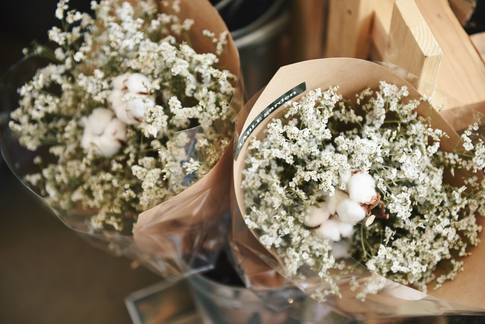 Gypsophila Pictures | Download Free Images on Unsplash