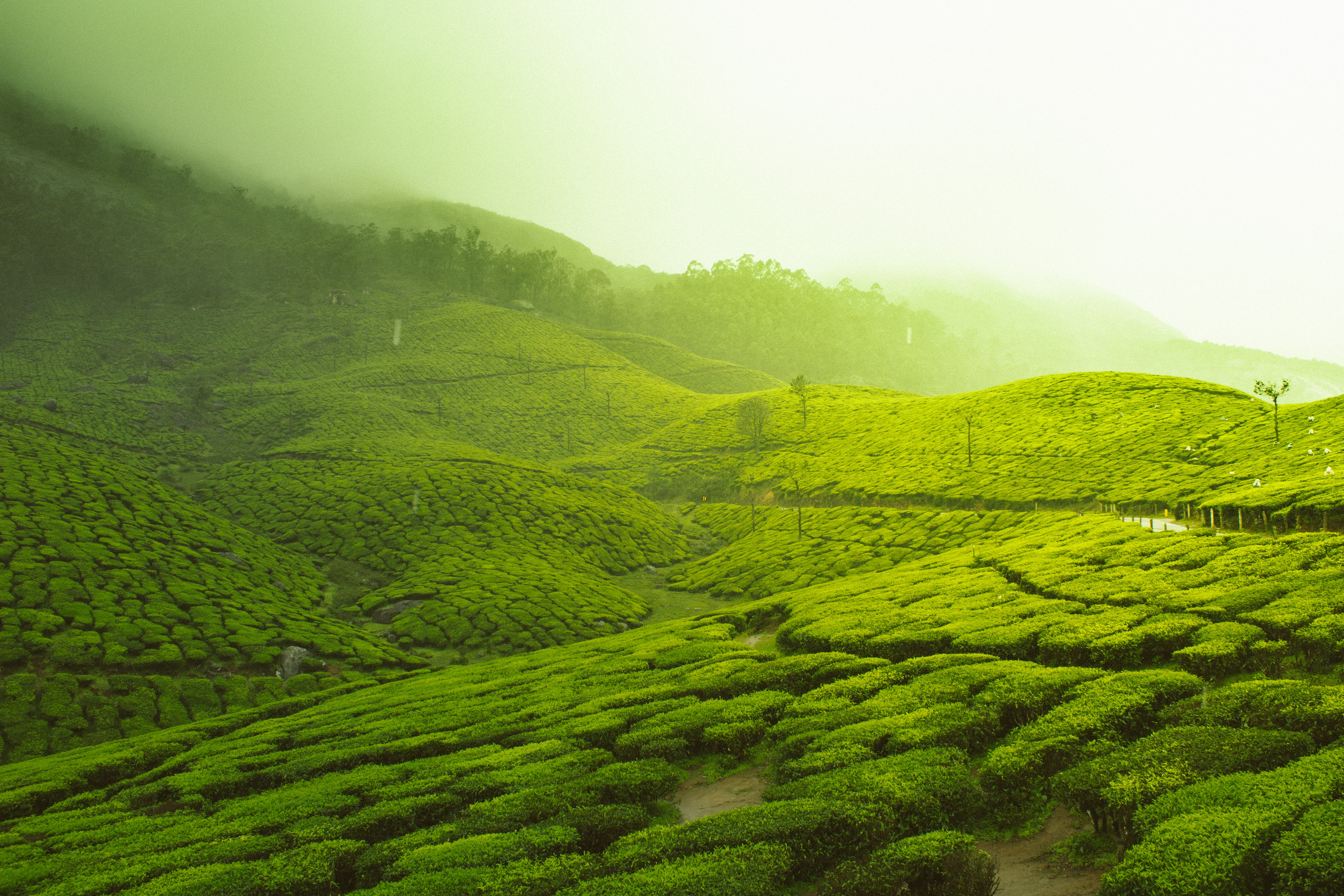 Lush green fields covered in mist