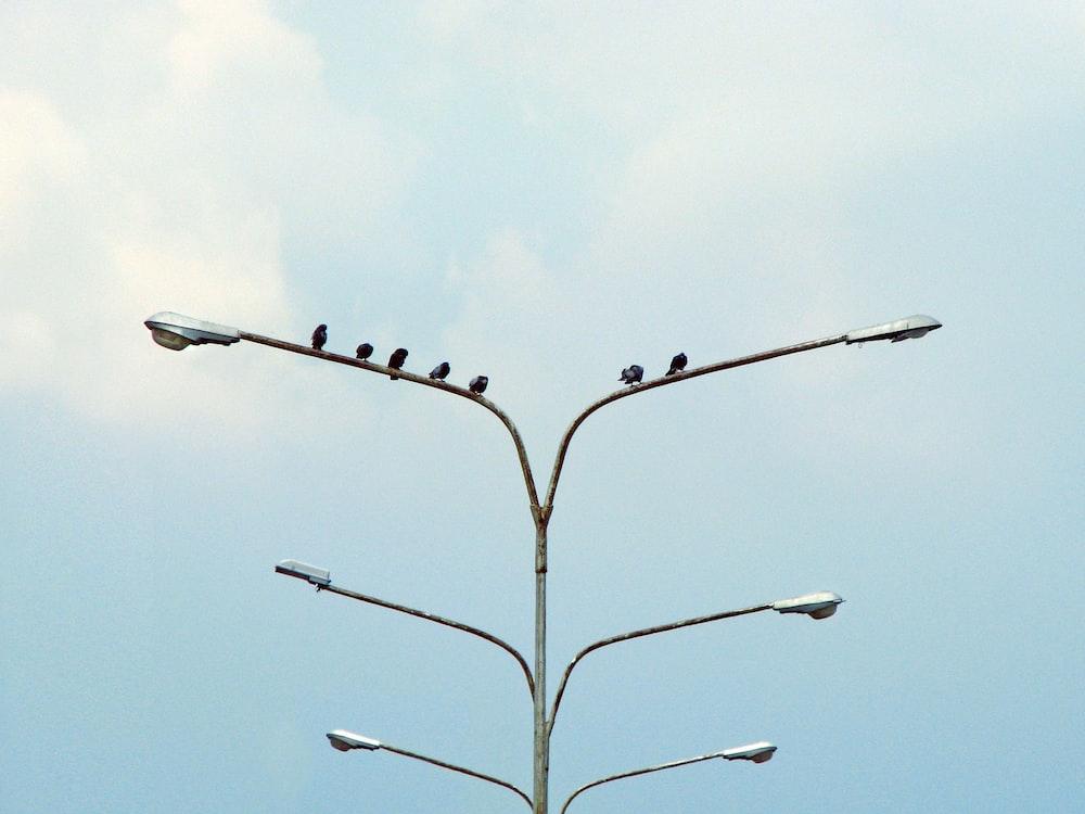 six black birds perching on street lamp