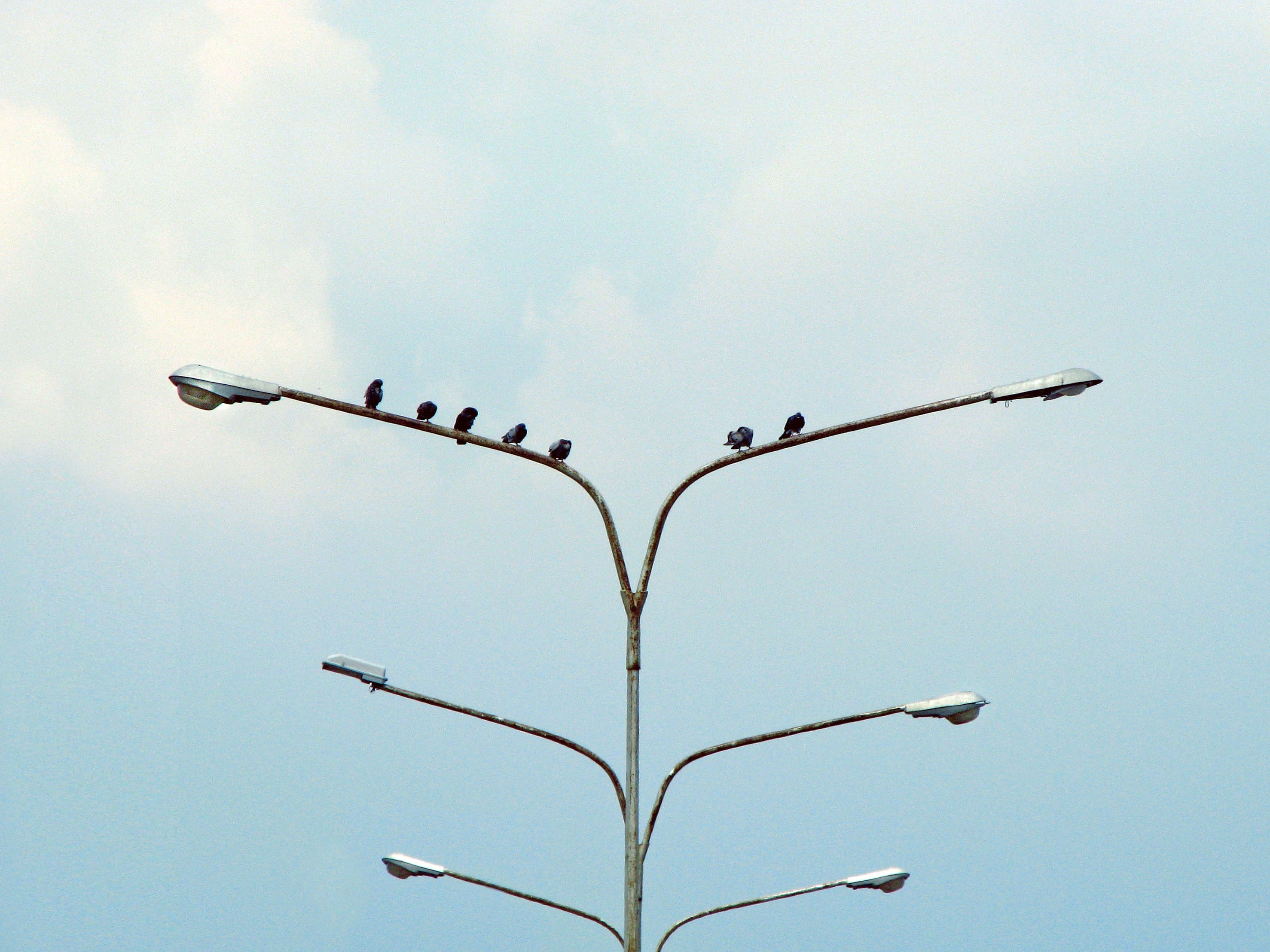 six black birds perching on street lamp
