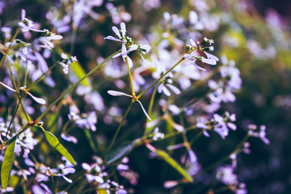 close-up photo of purple petaled flowers