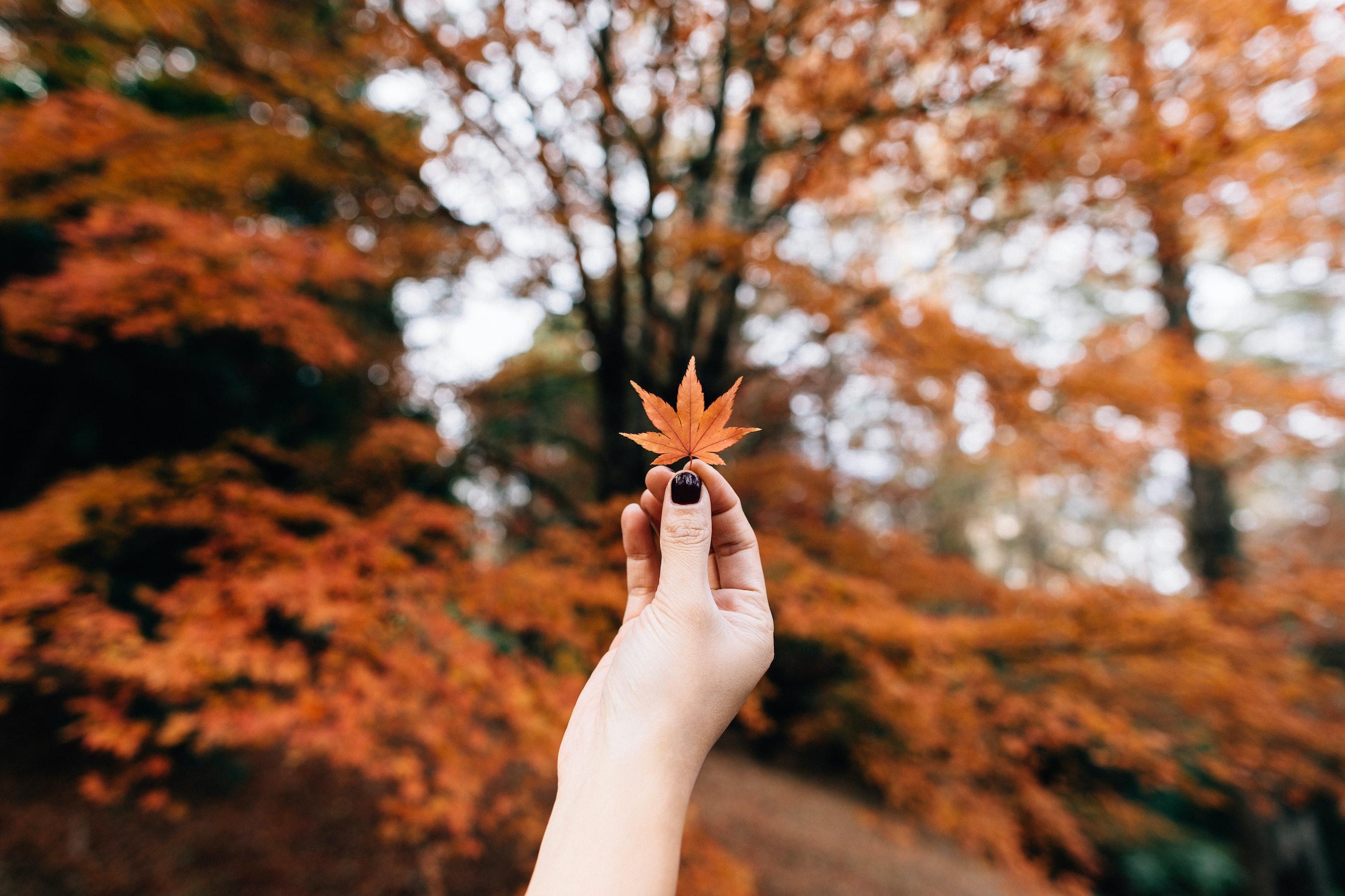 Herfst: het ideale seizoen voor het kopen van tuinmeubels