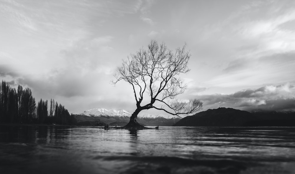 Black And White Long Shot Of The Wanaka Tree In New Zealand With Cloudy Sky
