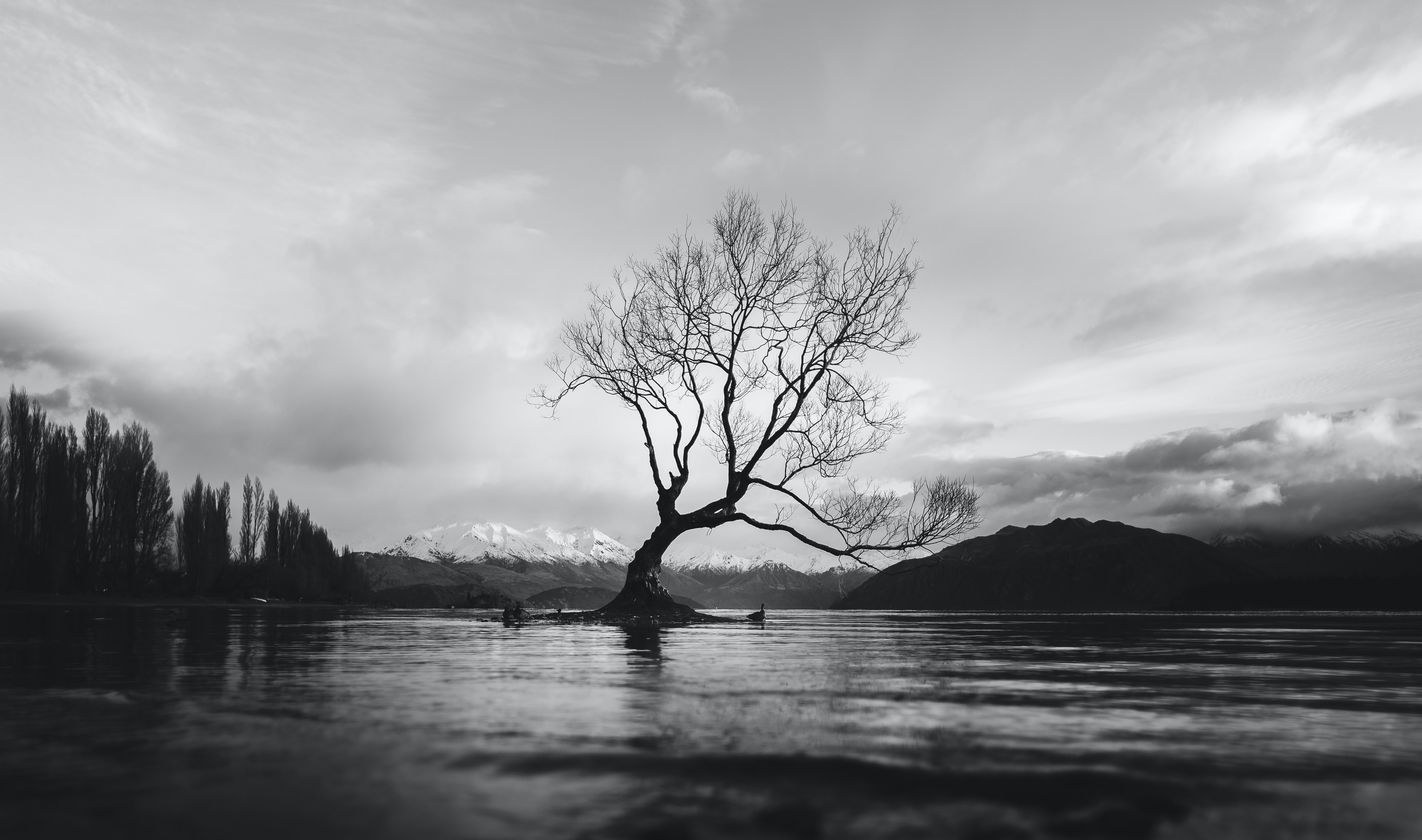 grayscale photo of bare tree on calm body of water