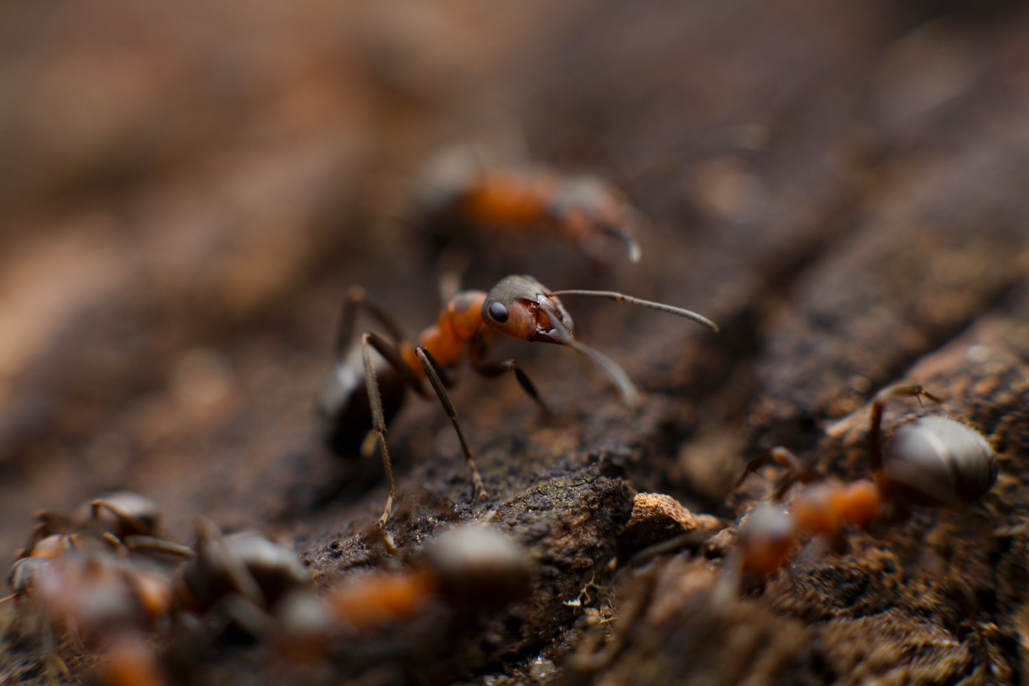 ants in the ground