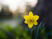 yellow 6-petal flower selective focus photo