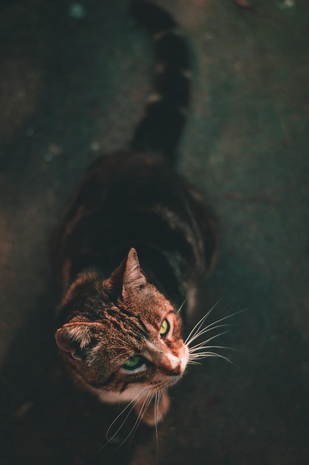 gray tabby cat sitting on gray floor