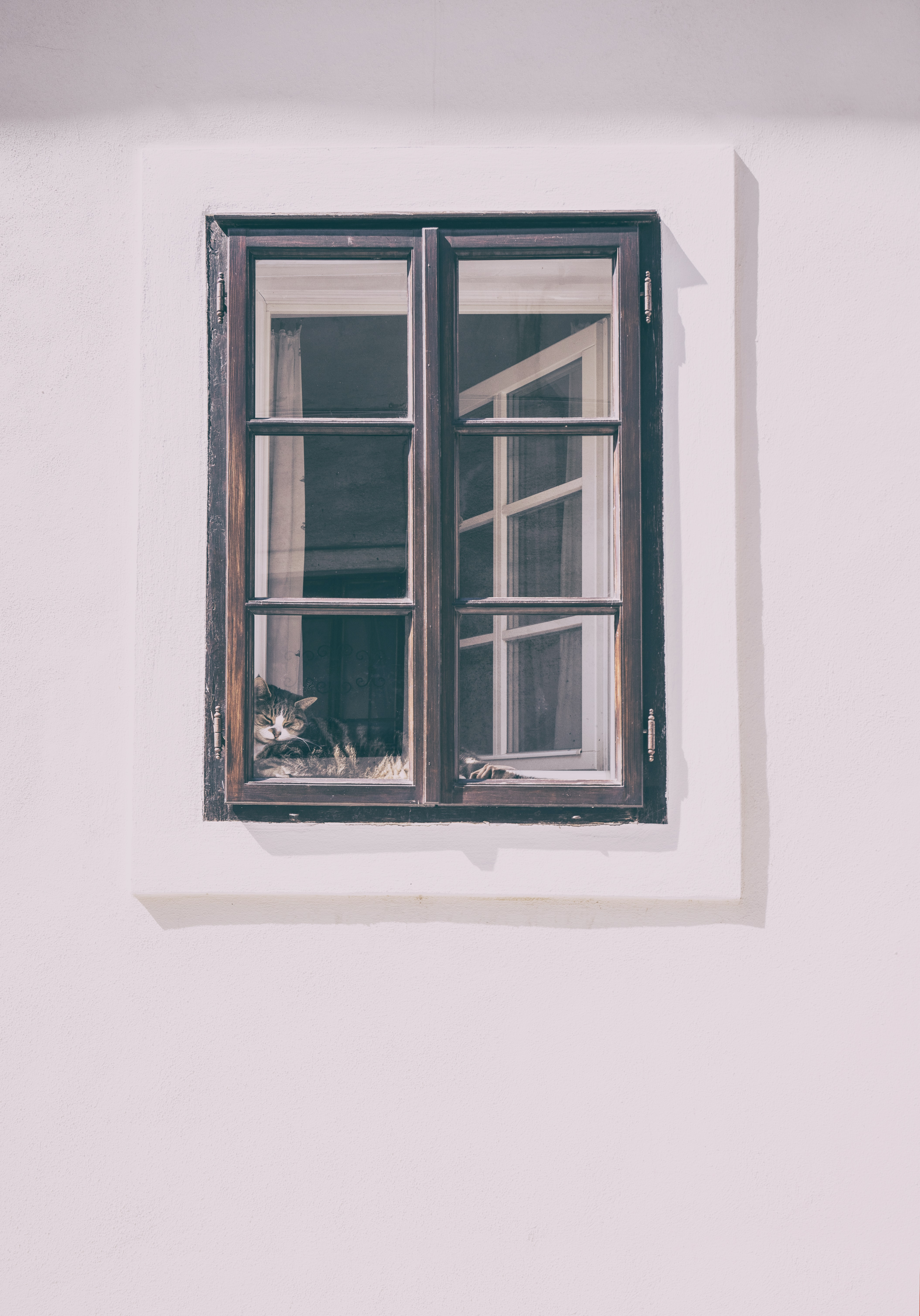 A tabby cat lying on the window sill seen from the outside & Window Frame Pictures   Download Free Images on Unsplash