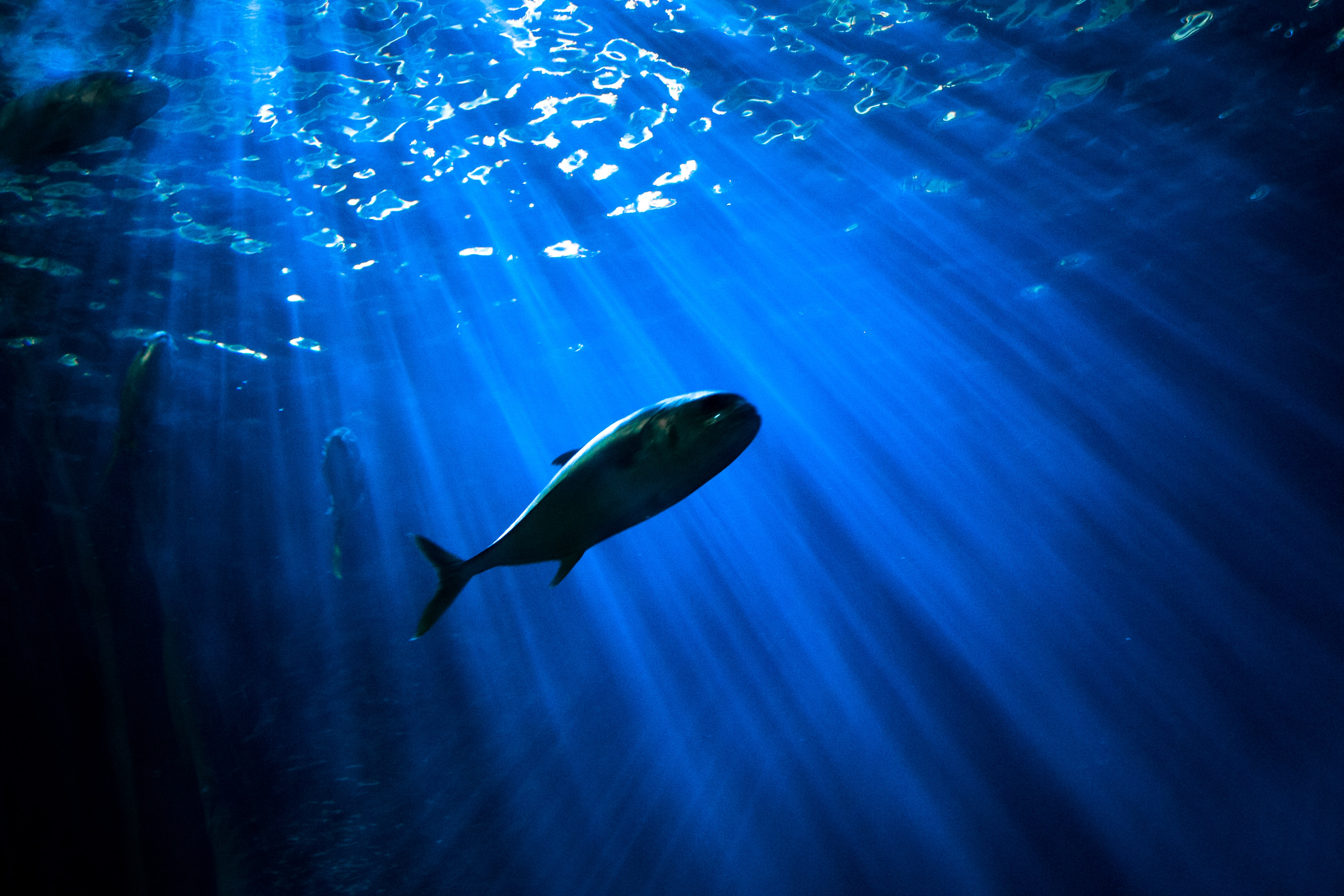 fish under body of water