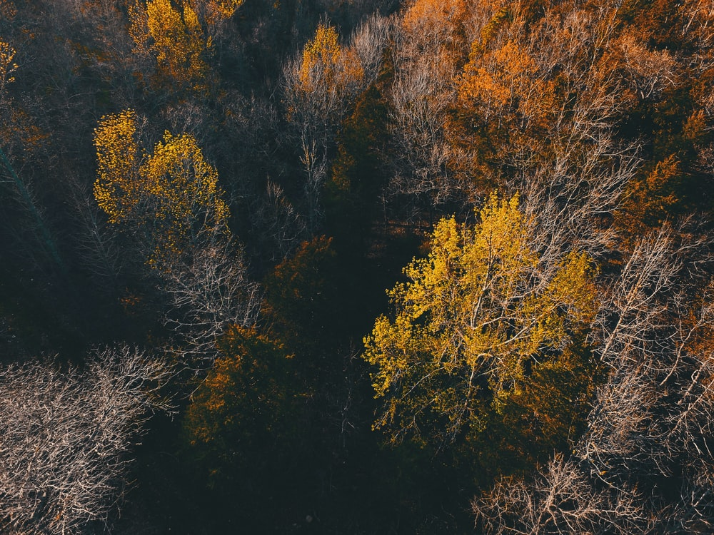 green and brown forest
