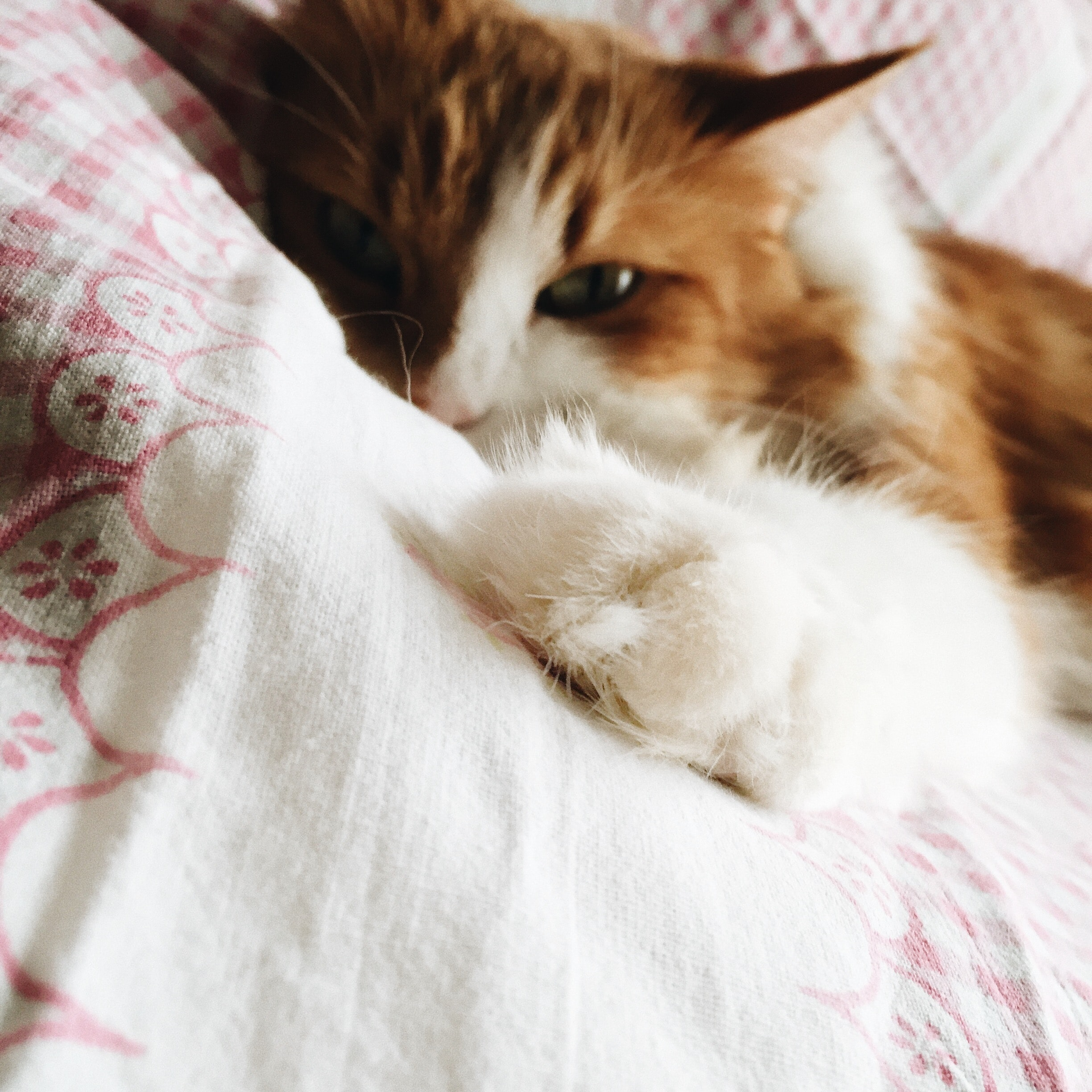 Orange and white cat lying on a bed blanket with stretched out paw