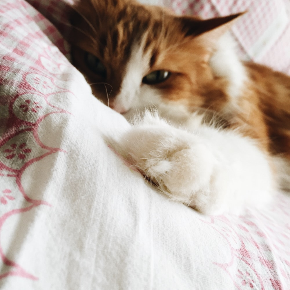 brown and white cat lying on white and red floral bed