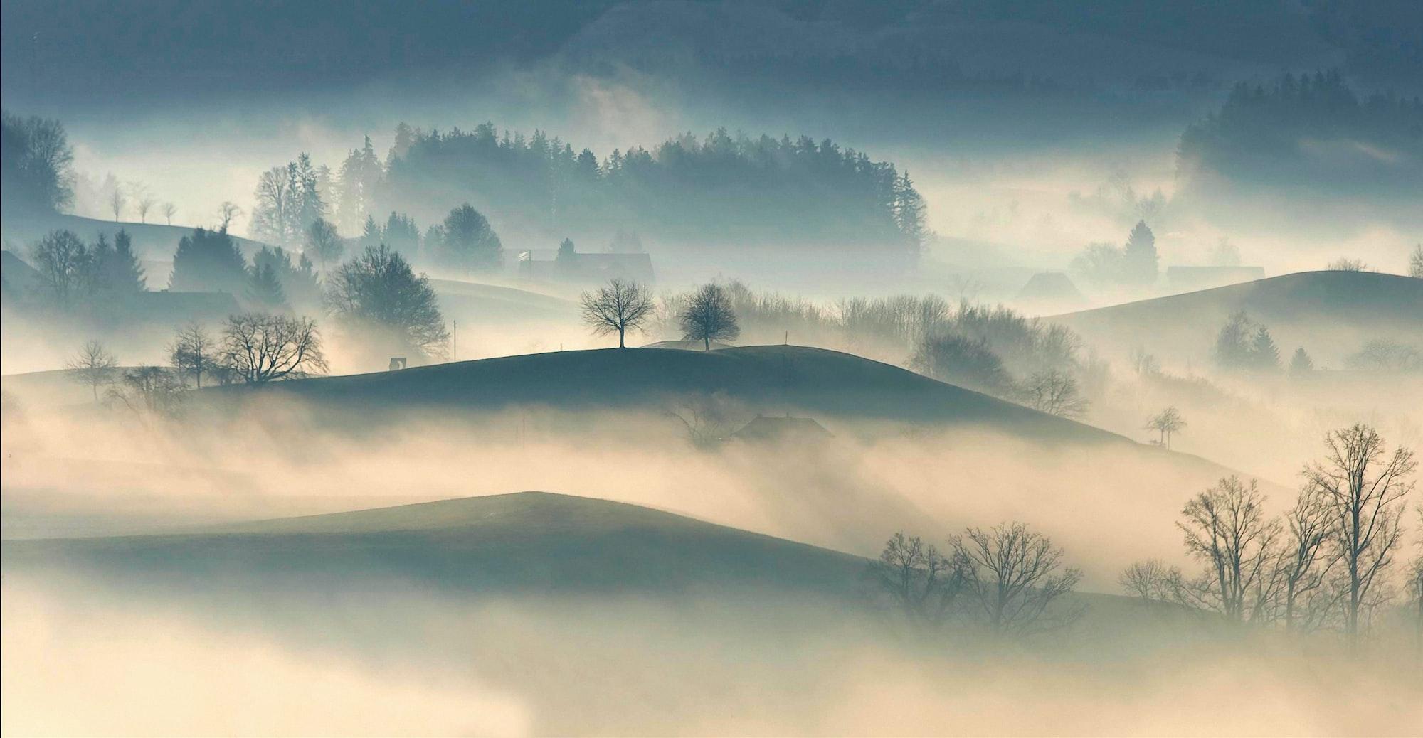 Feux De Brouillard : Avant et Arrière