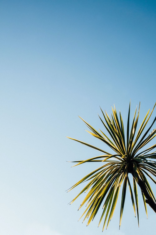close-up photo of green leaf plant under blue sky