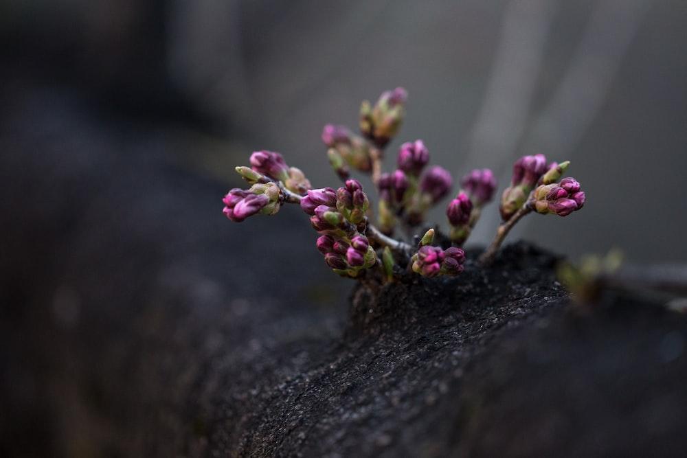 tilt shift lens photography of pink flowefrs