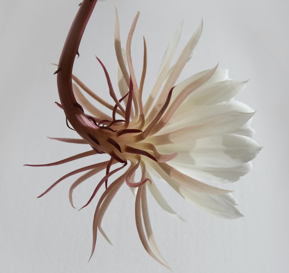 white and brown flower