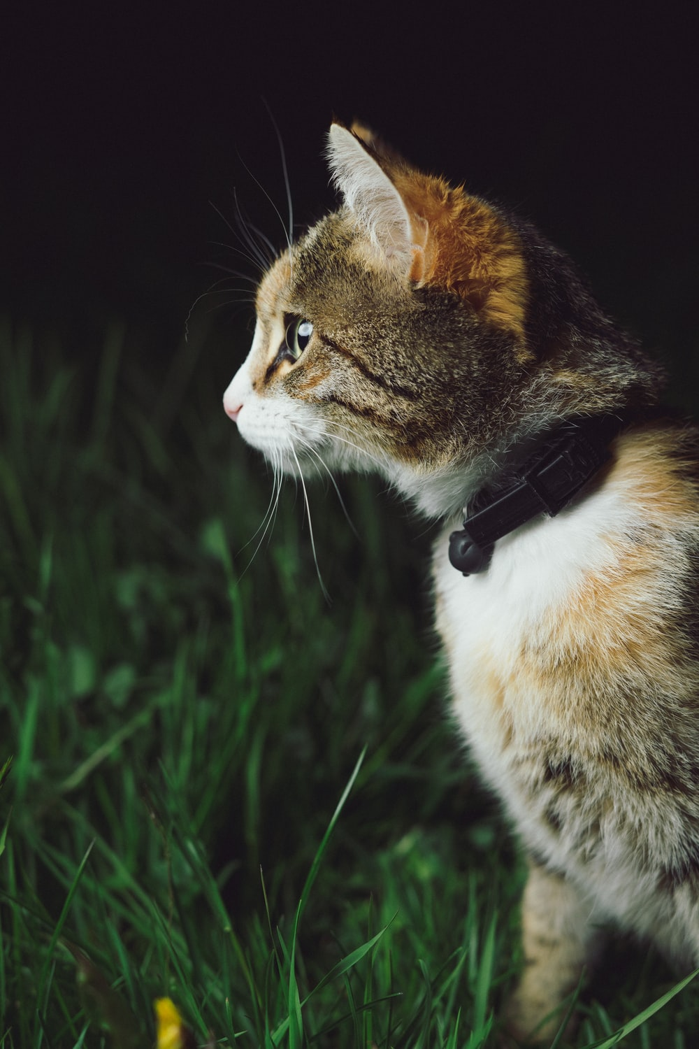 calico cat standing on grass field