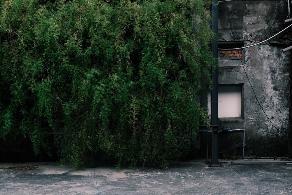 gray concrete building near green bushes