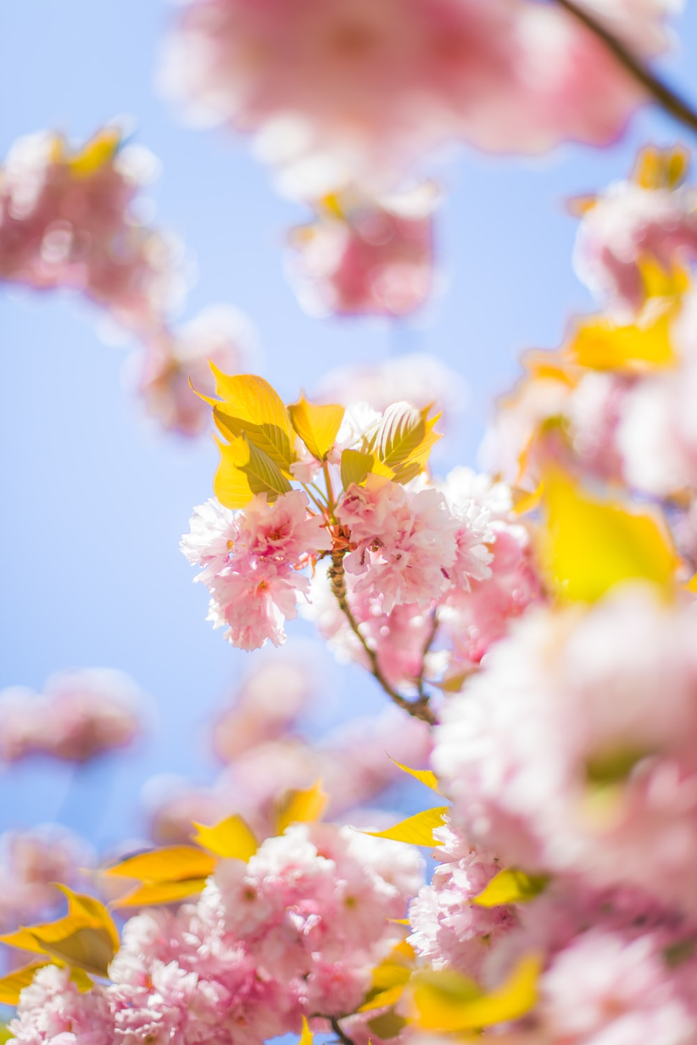pink cherry blossom tree during daytime