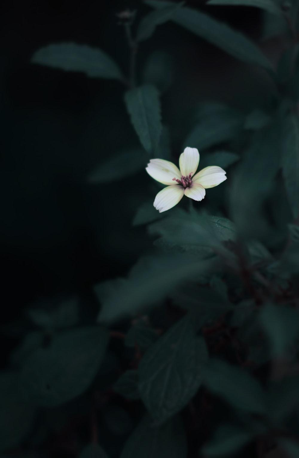 Dark Pink Flowers Aesthetic