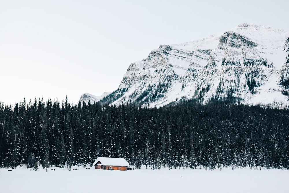snow-covered cabin near forest