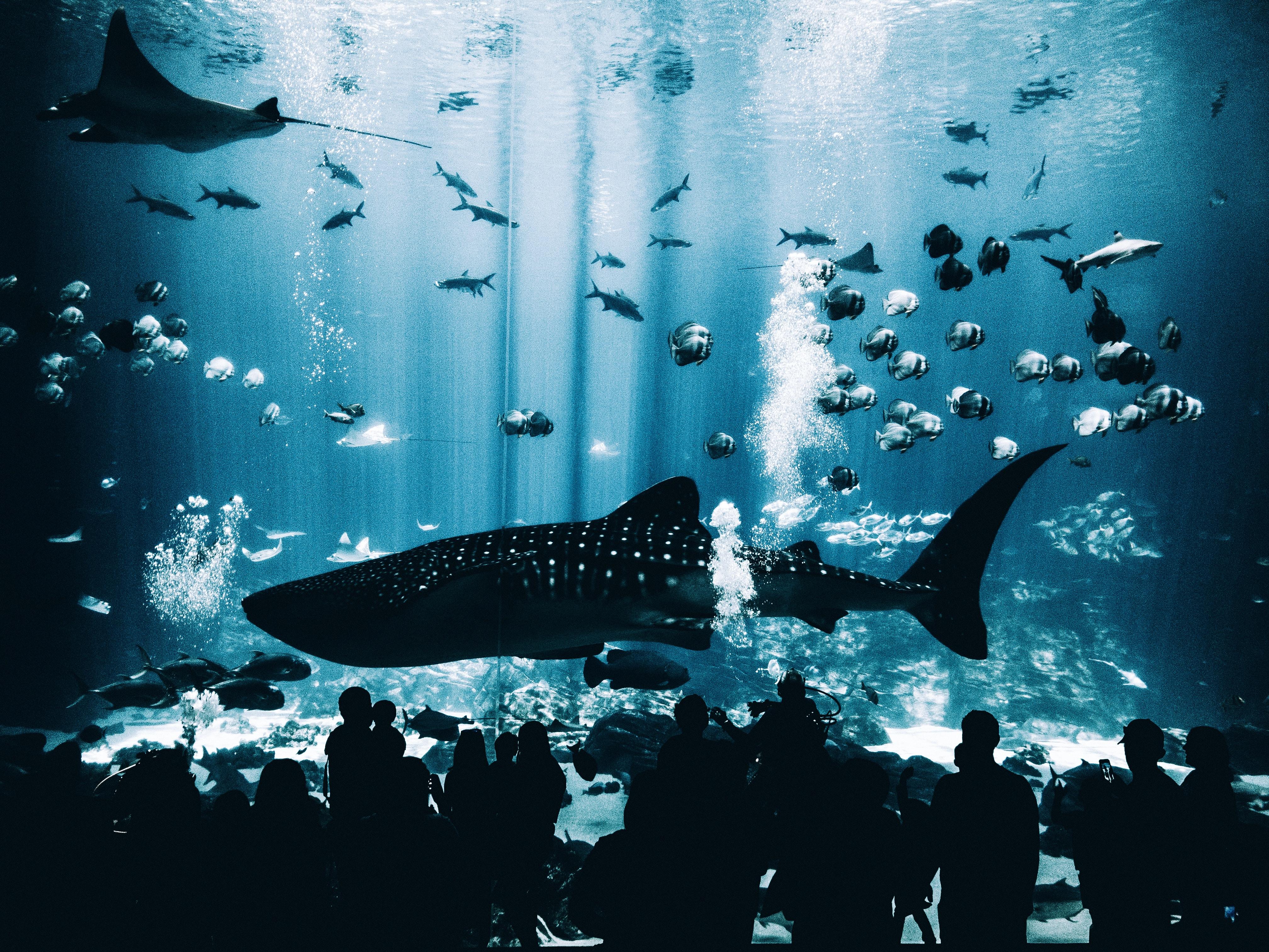 Georgia Aquarium photo by Matt Helbig (@mtthlbg) on Unsplash