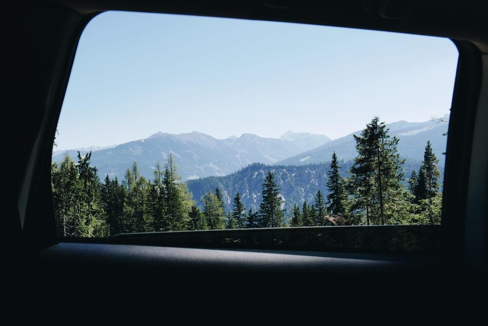 landscape photography of pine tree near mountain