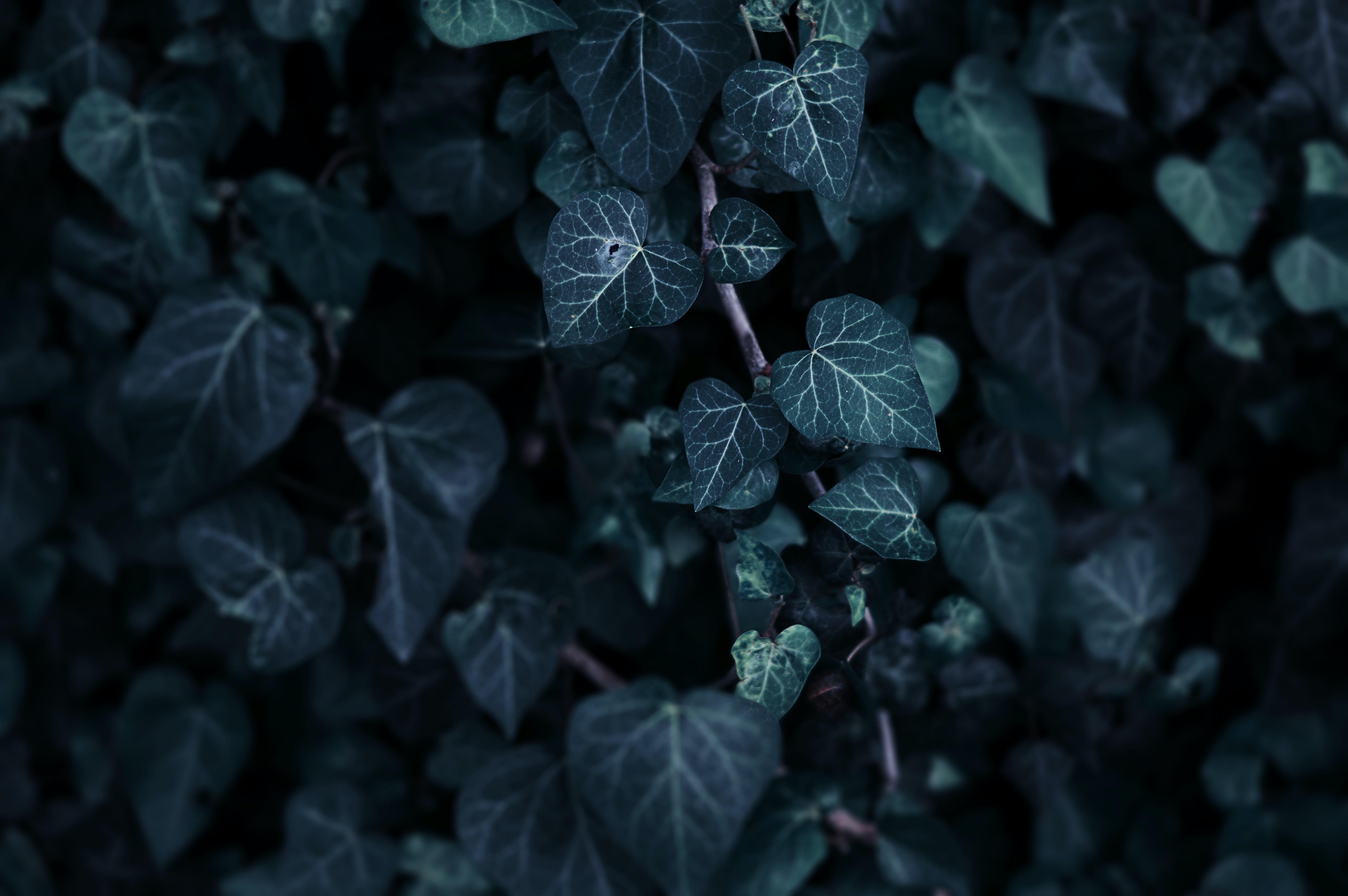 Green leaves at Har Yona
