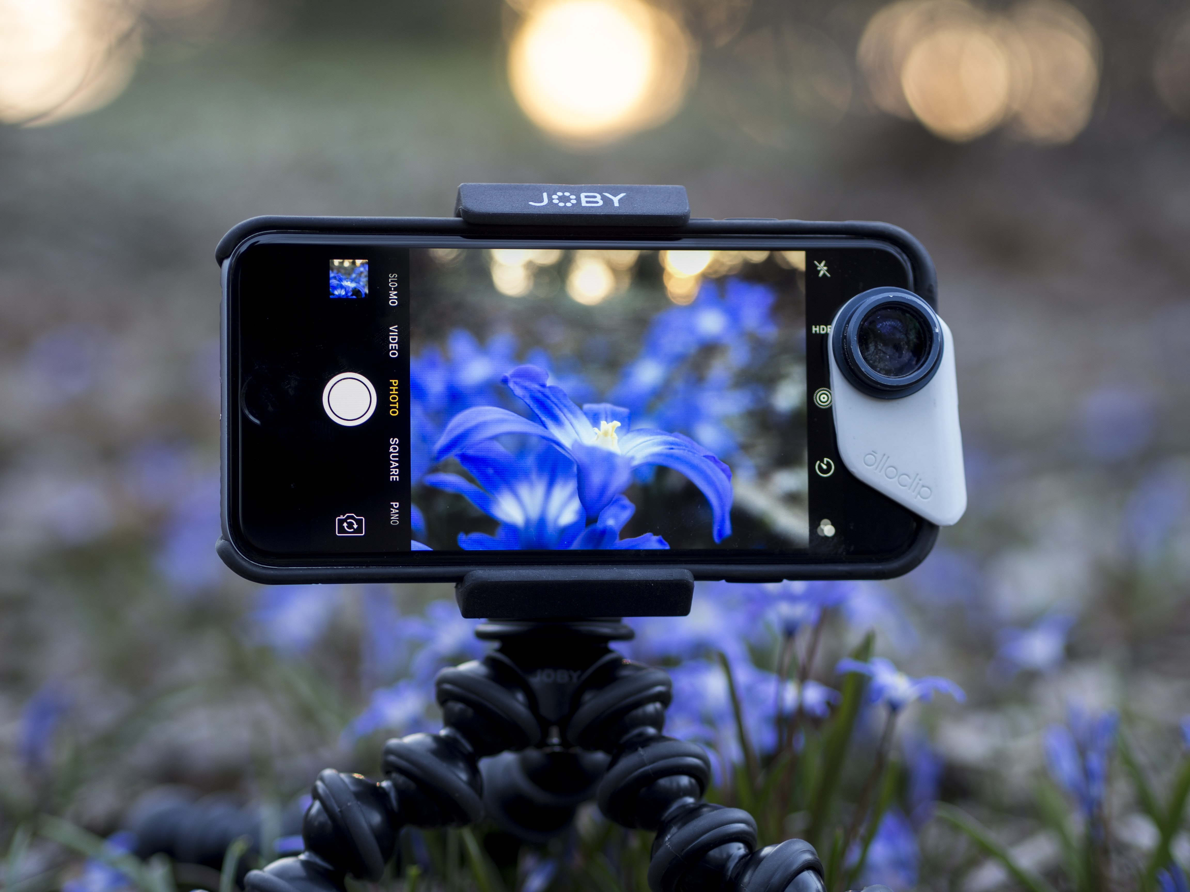 A smartphone taking a picture of blue flowers.