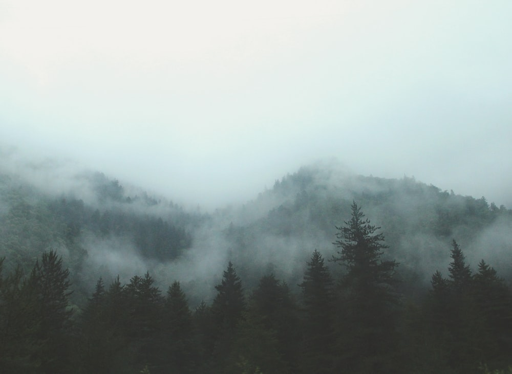 green trees surrounded by fogs