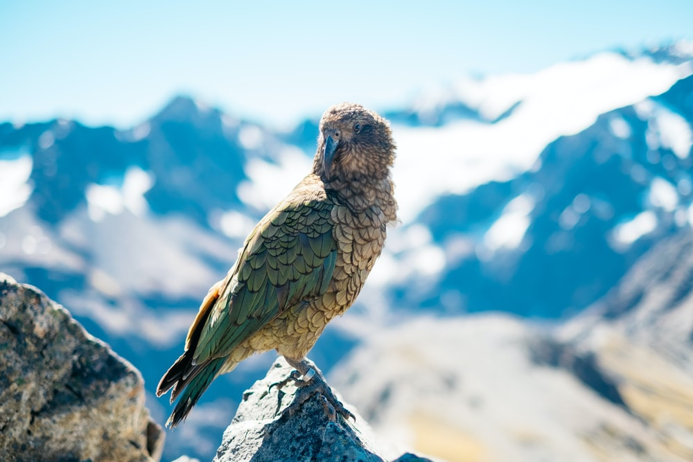 shallow focus photography of gray and green bird on mountain rock during daytime