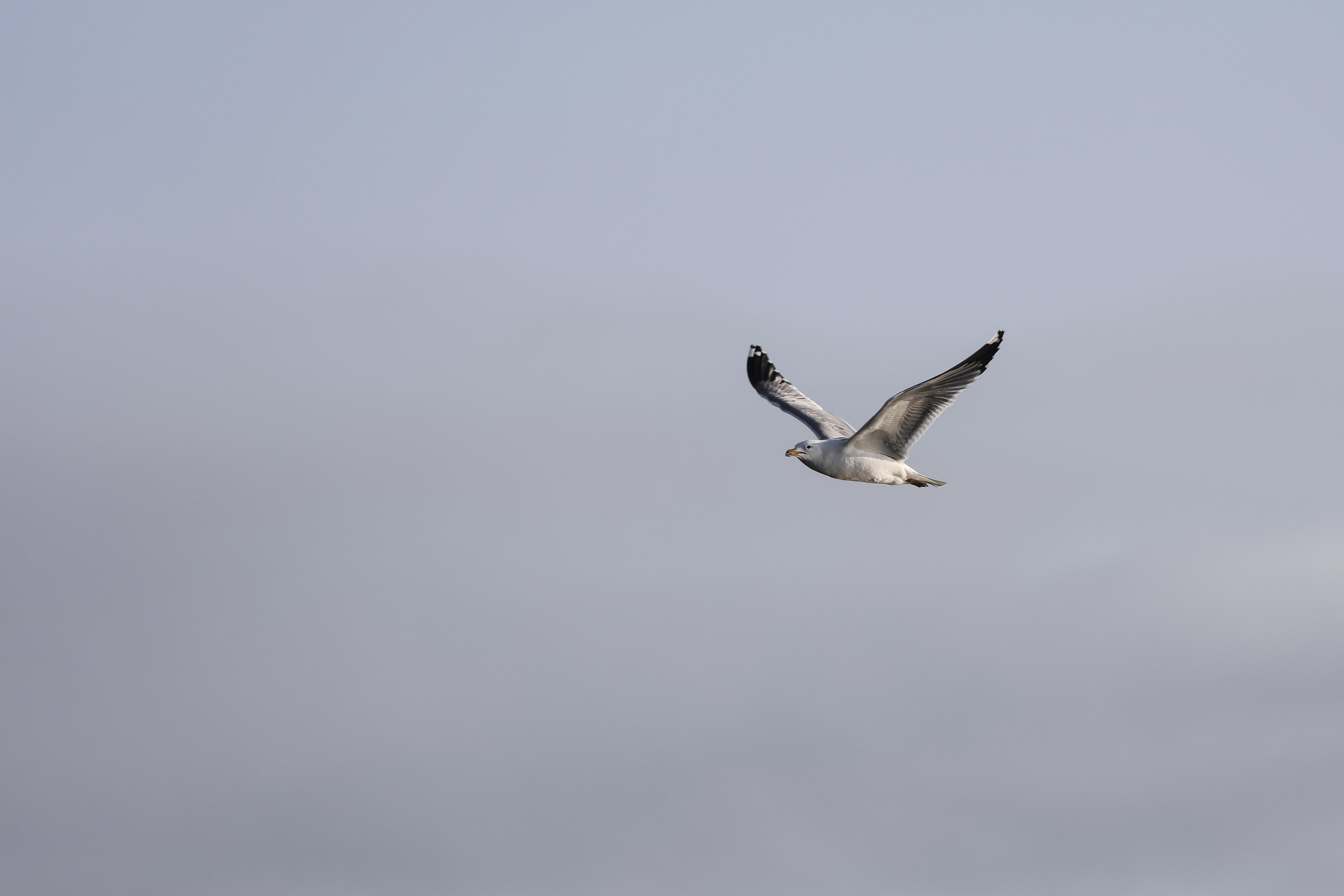 bird flying during daytime
